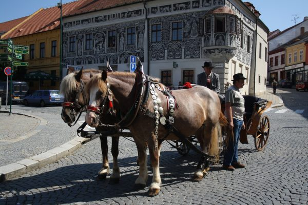 horse and carriage in street