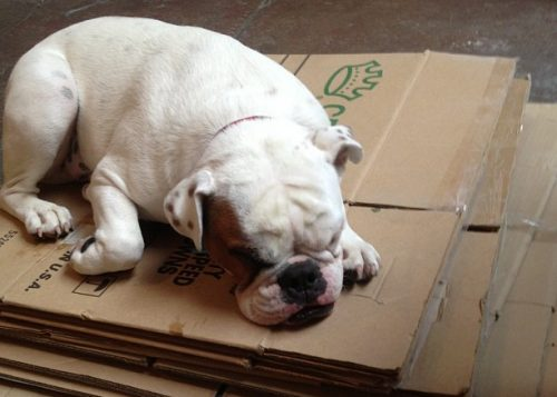 We help you ease the frustrations involved with moving and dealing with your furriest family member.